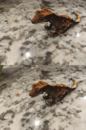 Tumblr, Bart, and Blog: salsaspot: amyalexandra-reptiles: I fed Bart some crickets yesterday and suddenly something in his lizard brain glitched and he sat like this. He sat like a dog. Error 404: Geck not found. Booting program file: Dog.