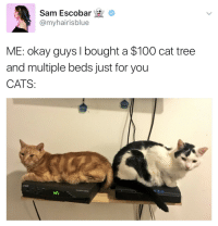Anaconda, Cats, and Internet: Sam Escobar *  @myhairisblue  c  ME: okay guys I bought a $100 cat tree  and multiple beds just for you  CATS <p>Cuando compras una cama cara para gatos pero entienden la relación entre ellos e internet</p>