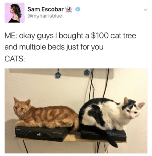 Anaconda, Cats, and Okay: Sam Escobar *  @myhairisblue  c  ME: okay guys I bought a $100 cat tree  and multiple beds just for you  CATS