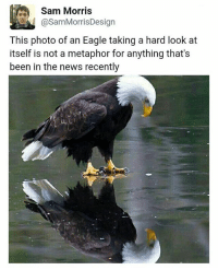 @chaos.reigns_: Sam Morris  asamMorrisDesign  This photo of an Eagle taking a hard look at  itself is not a metaphor for anything that's  been in the news recently @chaos.reigns_