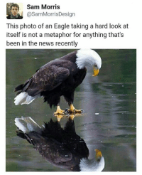 metaphorically: Sam Morris  CasamMorris Design  This photo of an Eagle taking a hard look at  itself is not a metaphor for anything that's  been in the news recently