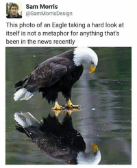 Follow @jerrynews to keep up with 🇺🇸: Sam Morris  SamMorrisDesign  This photo of an Eagle taking a hard look at  itself is not a metaphor for anything that's  been in the news recently Follow @jerrynews to keep up with 🇺🇸