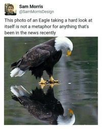 """why are you like this? (follows appreciated @chaos.reigns_) (caption changed because too many people butt """"Hurt"""" lol): @Sam MorrisDesign  This photo of an Eagle taking a hard look at  itself is not a metaphor for anything that's  been in the news recently why are you like this? (follows appreciated @chaos.reigns_) (caption changed because too many people butt """"Hurt"""" lol)"""