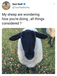 How, Sheep, and Sam: Sam Neill  @TwoPaddocks  My sheep are wondering  how you're doing , all things  considered? <p>Sam Neill being Sam Neill</p>