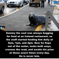 Memes, 🤖, and Seals: Sammy the seal was always begging  for food at an Ireland restaurant, so  the staff started feeding him daily at  9am, 1 pm, and 4pm. Now he flops  out of the water, looks both ways,  crosses the road, and awaits his prize  at those exact times every day.  He is never late.