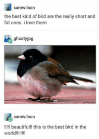 Beautiful, Love, and Best: samwilson  the best kind of bird are the really short and  fat ones. i love them  ghostyjpg  samwilson  !!!!l beautiful!! this is the best bird in the The best and most beautiful bird