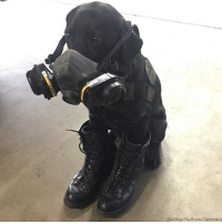 Fire, Memes, and San Diego: (San Diego Fire-Rescue Department) The San Diego Fire-Rescue Department suited up Emily the arson investigation dog amid concern she was inhaling smoke and burning her feet while sniffing out accelerants as wildfires churned through the area.