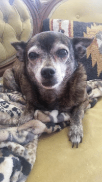 Sancho here reminding everyone November is Adopt a senior month!  Please don't buy that cute puppy in the window! #AdoptDontShop: Sancho here reminding everyone November is Adopt a senior month!  Please don't buy that cute puppy in the window! #AdoptDontShop