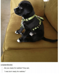 "Ask, Via, and They: sandbo  Are you ready for walkies? they ask.  ""I was born ready for walkies."" <p>He was born ready via /r/wholesomememes <a href=""https://ift.tt/2uvFA7w"">https://ift.tt/2uvFA7w</a></p>"