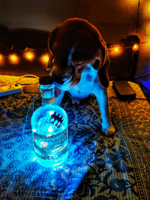 Made a new night lamp. Joey (the doggo) is camera shy but he's an insane poser 🔥🥰: SAOE?  MONKEY  NOULDE  27 SP2001H AND PC  LENDED MALT SCOTCH WHISKY  AE O SILL TURN THE M4ALTING BAR HAND  as& STOY, AND INSPIRED BY TNE  aE SPEYTOE SINGLE MALTS THEN MARRIED TO  R 15 BLENDED N SMAL 8ATCHES O  TASTE  DTILESE ARED&SOTED NS ND  EANE&SONS LTD 100AND MAN PLY OWMED  e Made a new night lamp. Joey (the doggo) is camera shy but he's an insane poser 🔥🥰