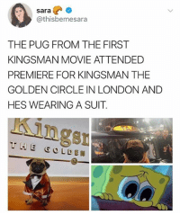 🐶❤️: sara  @thisbemesara  THE PUG FROM THE FIRST  KINGSMAN MOVIE ATTENDED  PREMIERE FOR KINGSMAN THE  GOLDEN CIRCLE IN LONDON AND  HES WEARING A SUIT  ngsn 🐶❤️