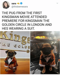 What a boss | Follow @aranjevi for more!: sara-  @thisbemesara  THE PUG FROM THE FIRST  KINGSMAN MOVIE ATTENDED  PREMIERE FOR KINGSMAN THE  GOLDEN CIRCLE IN LONDON AND  HES WEARING A SUIT.  ing  HE GO LDE What a boss | Follow @aranjevi for more!