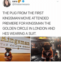 WHY DONT ALL PUGS WEAR SUITS: sara?  @thisbemesara  THE PUG FROM THE FIRST  KINGSMAN MOVIE ATTENDED  PREMIERE FOR KINGSMAN THE  GOLDEN CIRCLE IN LONDON AND  HES WEARING A SUIT.  Kingsman  THE GOLDEN CIRCLE WHY DONT ALL PUGS WEAR SUITS