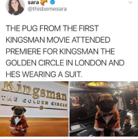 Aw: sara  @thisbemesara  THE PUG FROM THE FIRST  KINGSMAN MOVIE ATTENDED  PREMIERE FOR KINGSMAN THE  GOLDEN CIRCLE IN LONDON AND  HES WEARING A SUIT  Kingsman  THE GOLDEN CIRCLE Aw