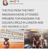 Dank, London, and Movie: sara  @thisbemesara  THE PUG FROM THE FIRST  KINGSMAN MOVIE ATTENDED  PREMIERE FOR KINGSMAN THE  GOLDEN CIRCLE IN LONDON AND  HES WEARING A SUIT.  Kingsman
