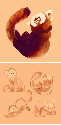 trickym00n:  saracastically: a commission of pushpa the red panda, from the duisburg zoo!+ bonus sketches!commissions are open!  @413kitty  Ahhh red pandas, i love those things: SARACASTİCALLYTUMBLR.COM trickym00n:  saracastically: a commission of pushpa the red panda, from the duisburg zoo!+ bonus sketches!commissions are open!  @413kitty  Ahhh red pandas, i love those things