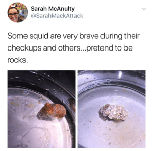 squidscientistas: poetic-irony:  my naem is skwid i am not fish. i mite be sick so im in dish. the doctor touch it give me shock. i do not trust so now im rock   10/10 squid poetry, on my evergreen squid tweet 😂 : Sarah McAnulty  SarahMackAttack  Some squid are very brave during their  checkups and others...pretend to be  rocks squidscientistas: poetic-irony:  my naem is skwid i am not fish. i mite be sick so im in dish. the doctor touch it give me shock. i do not trust so now im rock   10/10 squid poetry, on my evergreen squid tweet 😂