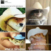 "Challenge: Use ""what in tarnation"" in a sentence in class or in a meeting: Sarah  @totally peachy.  the four horsemen of the apocalypse  what in tarnation  what in tarnation  what in tarnation?  what in tarnation Challenge: Use ""what in tarnation"" in a sentence in class or in a meeting"