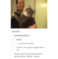 I feel so ashamed I haven't done any school work today: SarcarstiC:  antoinettemalificus:  mew2  why this cat so big  I want it. It's a giant snuggley dumb  cat  MLEM MLEM MLEM MLEM MILEM  MLEM MLEM.....BOOP..... MLEM I feel so ashamed I haven't done any school work today