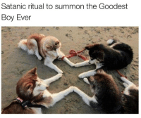 Boy, Ritual, and Summon: Satanic ritual to summon the Goodest  Boy Ever