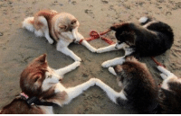Hood, Boy, and Ritual: Satanic ritual to summon the Goodest Boy Ever https://t.co/mDZNjxne7Q