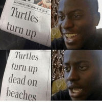 Memes, Turn Up, and 🤖: SATURDAY, DECEMBER 31, 2016  Turtles  turn up  Turtles  turn up  dead on  beaches Oh... (@funnyheadlines)