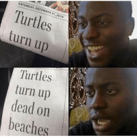 Turn Up, Girl Memes, and Turtles: SATURDAY, DECEMBER 31, 2016  Turtles  turn up  Turtles  turn up  dead on  beaches Well this is...upsetting.