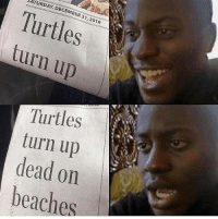 Memes, News, and Turn Up: SATURDAY, DECEMBER 31,2016  Turtles  turn up  Turtles  turn up  dead on  beaches @funnyheadlines posts the craziest news story headlines from this f*cked up world we live in. Go follow them 😂