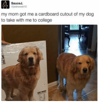 @bustle has the funniest memes on IG mustfollow: Sauce J.  ajostrowski12  my mom got me a cardboard cutout of my dog  to take with me to college  wETAINT @bustle has the funniest memes on IG mustfollow