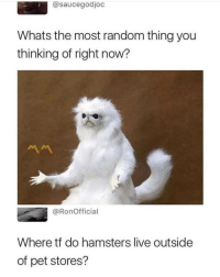I'm shook: @saucegodjoc  Whats the most random thing you  thinking of right now?  서서  @RonOfficial  Where tf do hamsters live outside  of pet stores? I'm shook