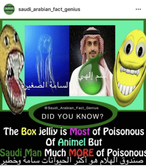 👁👄👁: saudi_arabian_fact genius  act  @Saudi Arabian Fact Genius  DID YOU KNOW?  The Box jelliy is Most of Poisonous  Of Animel But  Saudi Man Much MORE of Poisonous 👁👄👁