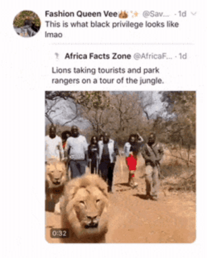 "Simba said ""Hello MTV, welcome to my crib"" (via /r/BlackPeopleTwitter): @Sav. 1d  Fashion Queen Vee  This is what black privilege looks like  Imao  Africa Facts Zone @AfricaF.. 1d  Lions taking tourists and park  rangers on a tour of the jungle  0:32 Simba said ""Hello MTV, welcome to my crib"" (via /r/BlackPeopleTwitter)"