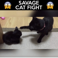 Advice, Memes, and Savage: SAVAGE  CAT FIGHT Viewer discretion is adviced (Teemu)
