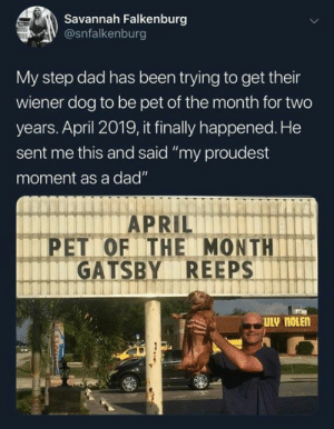 "Hot diggity dog: Savannah Falkenburg  @snfalkenburg  My step dad has been trying to get their  wiener dog to be pet of the month for two  years. April 2019, it finally happened. He  sent me this and said ""my proudest  moment as a dad""  PET OF THE MONTH  GATSBY REEPS Hot diggity dog"