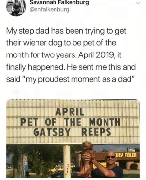"""Cute, Dad, and April: Savannah Falkenburg  @snfalkenburg  My step dad has been trying to get  their wiener dog to be pet of the  month for two years. April 2019, it  finally happened. He sent me this and  said """"my proudest moment as a dad""""  APRIL  PET OF THE MONTH  GATSBY REEPS  ULY NOLEN Thats cute."""