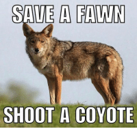 Memes, 🤖, and Tap: SAVE A FAWN  SHOOT A COYOTE DOUBLE TAP AND TAG FRIENDS