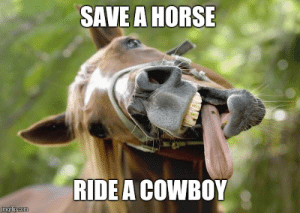 horsessuck - Imgflip: SAVE A HORSE  RIDE A COWBOY  imgtiip.com horsessuck - Imgflip