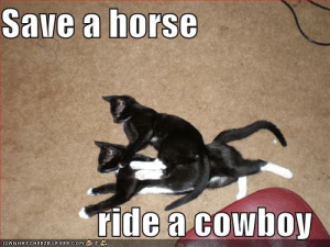 Save a horse ride a cowboy - Cheezburger - Funny Memes | Funny Pictures: Save a horse  ride a cowhoy Save a horse ride a cowboy - Cheezburger - Funny Memes | Funny Pictures