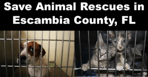 Memes, Animal, and Ability: Save Animal Rescues in  Escambia County, FL Please read and respond by contacting Escambia County Commissioners. Some may see this as a mere technicality, but this technicality could hinder your local rescues' ability to assist the municipal shelter in becoming no-kill.