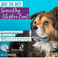 SAVE THE DATE Sevier D DATE Saturday November 4th IME 10 AM-4 PM LOCATION Cheviot Hills Recreation Center 2551 Motor Ave Los Angeles CA 90064 Shelter Me ACE ...