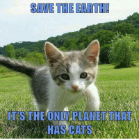 Cats, Memes, and Earth: SAVE THE EARTH!  IT'S THE ONLY PLANET THAT  HAS CATS