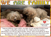 Animals, Desperate, and Dogs: SAVE  US  TOGETHER  PLEASE  Tapscott 44990 & Figaro 44991, two little 10 year old BROTHERS found  together in Brooklyn. Both needs TLC, Both need to be together,  BOTH hope you will save them together. Please, open your heart & get them  the heck outta there ASAP. They are waiting for you to save their lives at the  Brooklyn, NY ACC. Inquire about them now before it is too late! NYC - **THESE pups NEED us NOW** *** We are Family *** Tapscott 44990 & Figaro 44991, two little 10 year old BROTHERS found together in Brooklyn. Both need TLC, Both need to be together, BOTH hope you will save them together. Please, open your heart & get them the heck outta there ASAP. They are waiting for you to save their lives at the Brooklyn, NY ACC. Inquire about them now before it is too late!  ✔Pledge✔Tag✔Share✔Foster✔Adopt✔Save their lives!  Tapscott 44990 & Figaro 44991     Sex Male Age 10 yrs Found Location: Tapscott Street, Brooklyn, NY 11212 Date Found: 10/19/2018 Breed: Small Mixed Breed Cross ... NOTE: * WE HAVE NO OTHER INFORMATION THAN WHAT IS LISTED WITH THIS FLYER *  ... - For more information or to adopt, please EMAIL adopt@nycacc.org  - SUBJECT Line: Tapscott 44990 & Figaro 44991 at BACC  - Don't forget to add your email address and phone numbers where they can reach you to your email as well.  Thank you for caring. ❤. ... RE: ACC site Just because a dog is not on the ACC site does not mean they are safe by any means. There are many reasons for this like a hold or an eval has not been conducted yet or the dog is rescue-only... the list goes on... Please, do share & apply to foster/adopt these pups as well until their thread is updated with their most current status. TY!  ============ Shelter addresses ========== - Brooklyn Shelter: 2336 Linden Boulevard, Brooklyn, NY 11208  - Phone number: 212-788-4000 (is automated only) Operating hours: Monday through Friday 12.00pm to 8.00pm, Saturday & Sunday: 10.00am to 6.00pm. Closed on all Holidays. =