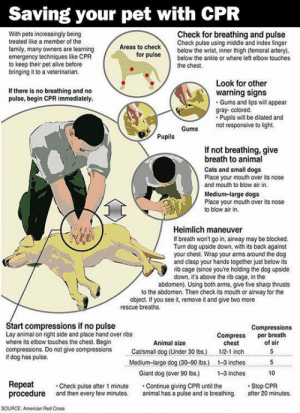 lolzandtrollz:  Every Dog Owner Needs To Know This: Saving your pet with CPR  Check for breathing and pulse  Check pulse using middle and index finger  below the wrist, inner thigh (temoral artery).  below the ankle or where left elbow touches  With pets increasingly being  treated like a member of the  Areas to check  family, many owners are learning  emergency techniques like CPR  to keep their pet alive before  bringing it to a veterinarian.  for pulse  the chest  Look for other  warning signs  Gums and lips will appear  gray- colored.  Pupils will be dilated and  not responsive to light  If there is no breathing and no  pulse, begin CPR immediately.  Gums  Pupils  If not breathing, give  breath to animal  Cats and small dogs  Place your mouth over its nose  and mouth to blow air in.  Medium-large dogs  Place your mouth over its nose  to blow air in  Heimlich maneuver  If breath won't go in, airway may be blocked.  Turn dog upside down, with its back against  your chest. Wrap your arms around the dog  and clasp your hands together just below its  rib cage (since you're holding the dog upside  down, it's above the rib cage, in the  abdomen). Using both arms, give five sharp thrusts  to the abdomen. Then check its mouth or airway for the  object. If you see it, remove it and give two more  rescue breaths  Start compressions if no pulse  Lay animal on right side and place hand over ribs  where its elbow touches the chest. Begin  compressions. Do not give compressions  if dog has pulse.  Compressions  per breath  of air  Compress  chest  Animal size  Catsmall dog (Under 30 lbs.)  5  1/2-1 inch  Medium-large dog (30-90 lbs.)  1-3 inches  5  Giant dog (over 90 lbs.)  1-3 inches  10  Repeat  procedure  Stop CPR  after 20 minutes.  Check pulse after 1 minute  and then every few minutes.  Continue giving CPR until the  animal has a puise and is breathing.  soURCE  American Red Cross lolzandtrollz:  Every Dog Owner Needs To Know This