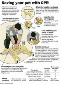 <p><b>Please reblog</b> to signal boost and spread awareness<br/><br/>(image via American Red Cross)</p>: Saving your pet with CPR  With pets increasingly being  treated like a member of the  family, many owners are learning  emergency techniques like CPR  to keep their pet alive before  bringing it to a veterinarian.  Check for breathing and pulse  Check pulse using middle and index finger  below the wrist, inner thigh (femoral artery)  Areas to check  orpulsebelow the ankle or where left elbow touches  the chest.  Look for other  If there is no breathing and no  pulse, begin CPR immediately.  warning signs  Gums and lips will appear  gray- colored  Pupils will be dilated and  Gums  not responsive to light.  Pupils  If not breathing, give  breath to animal  Cats and small dogs  Place your mouth over its nose  and mouth to blow air in.  Medium-large dogs  Place your mouth over its nose  to blow air in.  Heimlich maneuver  If breath won't go in, airway may be blocked.  Turn dog upside down, with its back against  your chest. Wrap your arms around the dog  and clasp your hands together just below its  rib cage (since you're holding the dog upside  down, it's above the rnb cage, in the  abdomen). Using both arms, give five sharp thrusts  to the abdomen. Then check its mouth or airway for the  object. If you see it, remove it and give two more  rescue breaths.  Start compressions if no pulse  Lay animal on right side and place hand over ribs  where its elbow touches the chest. Begin  compressions. Do not give compressionsCasmll dog (Under 30 Ibs.)  if dog has pulse.  Compressions  Compress breath  Animal size  chest  of air  1/2-1 inc5  Medium-large dog (30-90 bs) 1-3 inches 5  Giant dog (over 90 bs.) -3 inches 10  Repeat Check pulse after 1 minute Continue giving CPR until the  procedure and then every few minutes animal has a pulse and is breathing. afer 20 minutes.  Stop CPR  SOURCE: American Red Cross <p><b>Please reblog</b> to signal boost and spread awareness<br/>