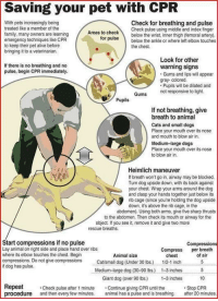 "Alive, Cats, and Dogs: Saving your pet with CPR  With pets increasingly being  treated like a member of the  family many owners are learning  emergency techniques like CPR  to keep their pet alive before  bringing it to a veterinarian.  Check for breathing and pulse  Areas to check  orpuse  Check pulse using middle and index finger  below the wrist, inner thigh (femoral artery)  below the ankle or where left elbow touches  the chest.  Look for other  warning signs  Gums and lips will appear  gray-colored  If there is no breathing and no  pulse, begin CPR immediately.  Pupils will be dilated and  not responsive to light.  Gums  Pupils  If not breathing, give  breath to animal  Cats and small dogs  Place your mouth over its nose  and mouth to blow air in.  Medium-large dogs  Place your mouth over its nose  to blow air in.  Heimlich maneuver  If breath won't go in, airway may be blocked  Turn dog upside down, with its back against  your chest. Wrap your arms around the dog  and clasp your hands together just below its  rib cage (since you're holding the dog upside  down, it's above the rib cage, in the  abdomen). Using both arms, give five sharp thrusts  to the abdomen. Then check its mouth or airway for the  object. If you see it, remove it and give two more  rescue breaths  Start compressions if no pulse  Lay animal on right side and place hand over ribs  Compressions  Compress per breath  Animal size  chest  of air  compressions. Do not give compressions  if dog has pulse  Cat/small dog (Under 30 lbs.) 1/2-1 inch  Medium-large dog (30-90 lbs.)  1-3 inches5  Giant dog (over 90 lbs  Continue giving CPR until the  animal has a pulse and is breathing. after 20 minutes  1-3 inches  10  Repeat  procedure and then every few minutes  Check pulse after 1 minute  Stop CPR <p><a href=""https://doggos-with-jobs.tumblr.com/post/174409379110/a-little-ot-sorry-but-i-thought-it-was-useful-to"" class=""tumblr_blog"">doggos-with-jobs</a>:</p><blockquote><p>A little OT (sorry) but I thought it was useful to share with anyone who loves dogs: Here is how to save your dog with CPR (image taken from Working Dog magazine)</p></blockquote> important post"