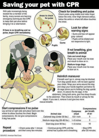 srsfunny:  Every Dog Owner Should Know This: Saving your pet with CPR  With pets increasingly being  treated like a member of the  family, many owners are learning  emergency techniques like CPR  to keep their pet alive before  bringing it to a veterinarian.  Check for breathing and pulse  Check pulse using middle and index finger  as to checkbelow the wrist, inner thigh (temoral artery)  ruse below the ankle or where left elbow touches  for  the chest.  Look for other  If there is no breathing and no  pulse, begin CPR immediately.  warning signs  Gums and lips will appear  gray- colored.  Pupils will be dilated and  not responsive to light.  Pupils  If not breathing, give  breath to animal  Cats and small dogs  Place your mouth over its nose  and mouth to blow air in.  Medium-large dogs  Place your mouth over its nose  to blow air in.  Heimlich maneuver  If breath won't go in, airway may be blocked.  Tun dog upside down, with its back against  your chest. Wrap your arms around the dog  and clasp your hands together just below its  rib cage (since you're holding the dog upside  down, it's above the rib cage, in the  abdomen). Using both arms, give five sharp thrusts  to the abdomen. Then check its mouth or airway for the  object. If you see it, remove it and give two more  rescue breaths.  Start compressions if no pulse  Lay animal on right side and place hand over ribs  where its elbow touches the chest. Begin  compressions. Do not give compressions tsmall dog (Under 30 lbs.)  if dog has pulse.  Compressions  Compress per breath  Animal size  chest  12-1 inch  of air  Medium-arge dog (30-90 lbs.) . 1-3 inches5  10  Giant dog (over 90 lbs) -3 inches  Repeat  procedure and then every few minutes. al has a pulse and is breathing. after 20 minutes.  Check pulse after 1 minute Continue giving CPR until the  Stop CPR  SOURCE: American Red Cross srsfunny:  Every Dog Owner Should Know This