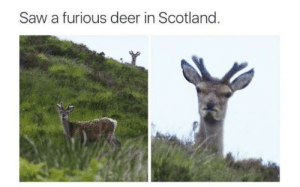 Deer, Saw, and Scotland: Saw a furious deer in Scotland.