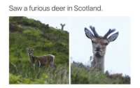 Deer, Saw, and Scotland: Saw a furious deer in Scotland. Scotland is full of surprises