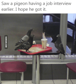 Job Interview, Saw, and Hope: Saw a pigeon having a job interview  earlier. I hope he got it. Saw a pigeon having a job interview earlier. I hope he got it.