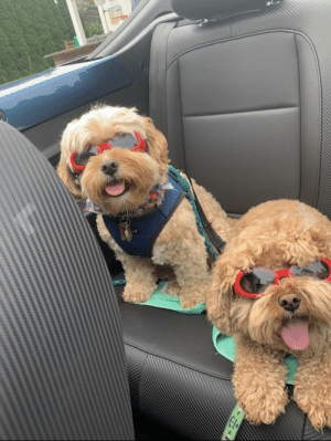 Saw these cool dudes in the reviews of a dog seat belt: Saw these cool dudes in the reviews of a dog seat belt